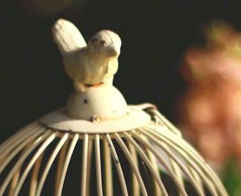 opera zingen als vogel